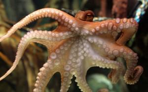 Paul had het slechts één keer eerder fout: in een finale. Dus laten we het zo zeggen dat de octopus het nooit fout had. Tijdens de finale wijst hij gewoon de verliezer aan, niet de winnaar.